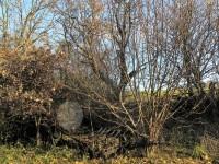 Dubovka, zapomenutý povoz