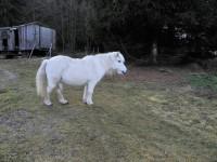 Krousov, setkání s koníkem