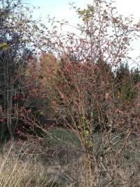 Krousov, pozdrav podzimu