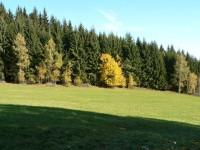 Křížovka, okraj lesa