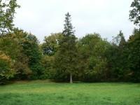 Bezděkov, zámecký park