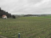 Sádek, vinice pod hradem