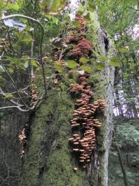 Pastvisko, kmen s houbami
