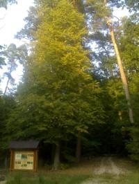Sítovka, - U Sítovky - Hradecké lesy