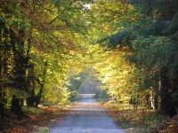 Vysocká cesta - Hradecké lesy