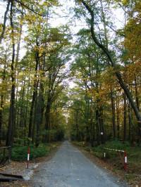 Hradecké lesy ohniště