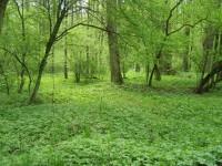 Přírodní rezervace Dubno