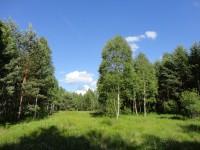 bývalá letecká střelnice - Hradecké lesy