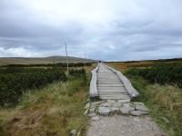 Cesta přes Úpské rašeliniště