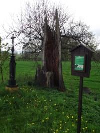 Třeština - obec památkově chráněných stromů