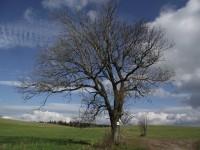 Prameny (Štolnava, Stollenhau) – rozcestník