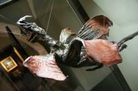 kuriozní drak z rejnoka