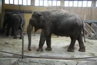 u slonů