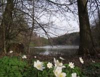 rybník pod Hvozdnou