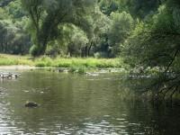 Klidná hladina mělké řeky, ke koupání přímo stvořeno