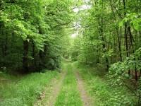 Lesní cesta procházející doubravou počátkem jara...