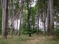 Chřiby rovná se bukové lesy