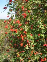 Podzimní úroda není bohatá pouze na révu...