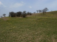 Pohled z údolí rezervace Horky
