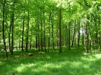 Jarní dubový porost nad Bohuslavicemi