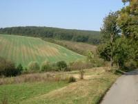Zvlněná krajina Ždánického lesa