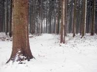 Smrkový les u Zavadilky