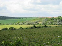 Vinohrady pod Vrbicí