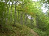 po modré krásnou přírodou