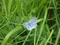 Po zdejších loukách se prohání desítky podobných motýlů