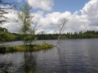 kladský rybník je opravdovou perlou zdejší přírody
