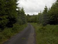 lesní silnička