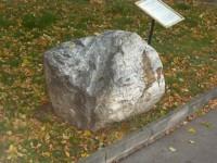 zkamenělý strom