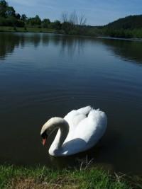 Čertův rybník u Čunína