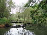Mlýnský potok zvaný též Střední Morava