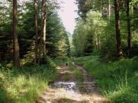 kolem Rabštejnského potoka