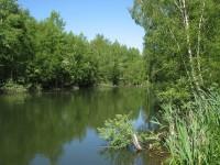 rybníček u chatové osady u Rynoltic