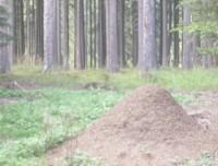 Šebeň - naučná stezka s mravenci