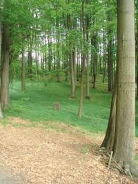 Lesy při cestě na Pohovku