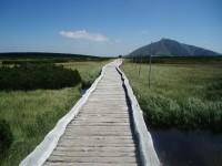 Chodník přes rašeliniště
