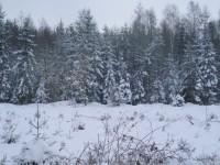 Lesy za Rozdělovem