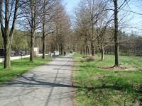 Cesta u hřbitova v Srbech