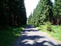 Cesta z Mariánských Bud