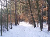 Náš les