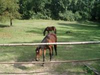Koně v Opárenském údolí