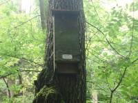Budka pro netopýri