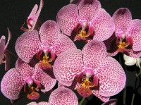 orchideje v bot.zahr.Liberec