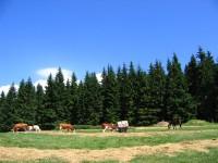 na farmě