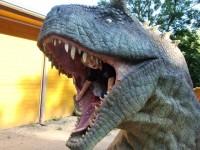 Fotosaurus :o)
