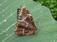 Výstava tropických motýlů