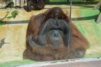 Zoo v Ústí je park pro děti i zvířata